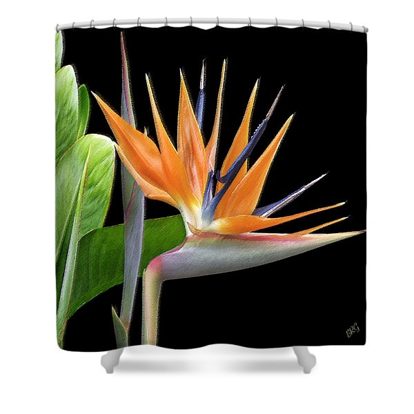 Royal Beauty I - Bird Of Paradise Shower Curtain by Ben and Raisa Gertsberg