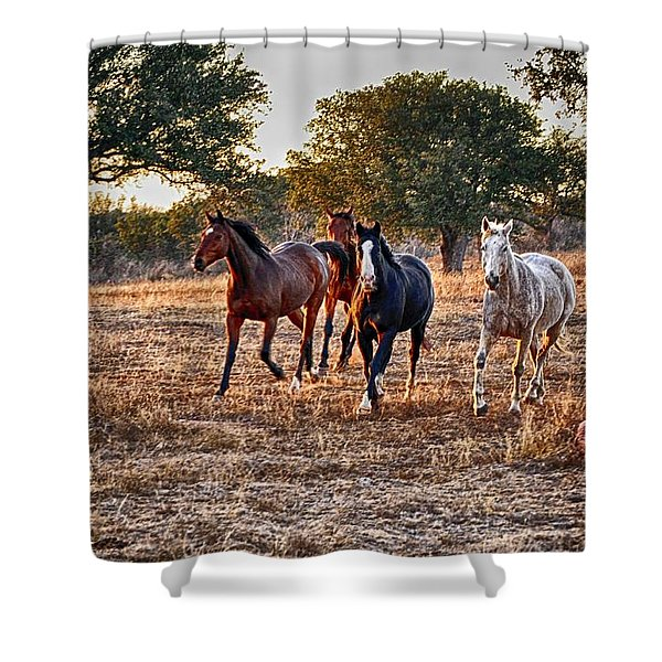 Running Horses Shower Curtain by Kristina Deane