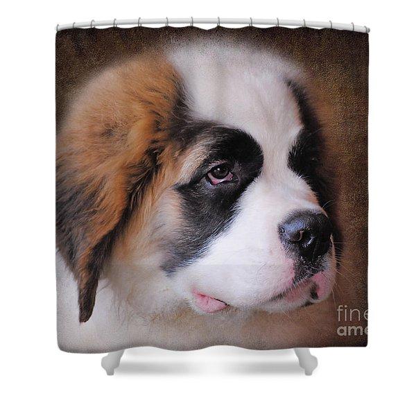 Saint Bernard Puppy Shower Curtain by Jai Johnson