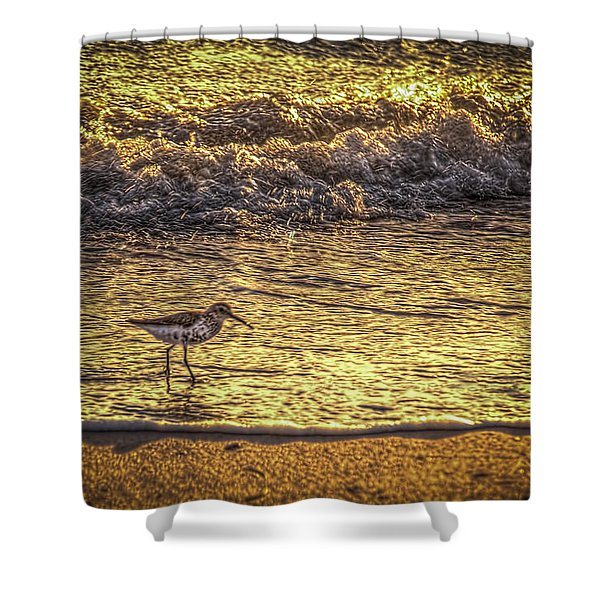 Sand Piper Shower Curtain by Marvin Spates