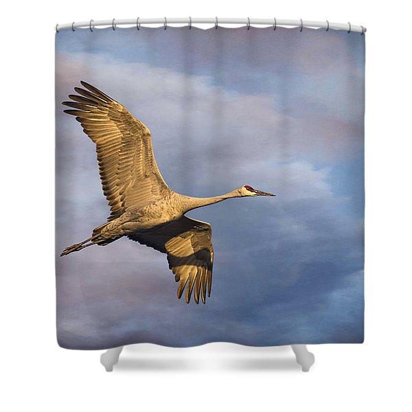 Sandhill Crane In Flight Shower Curtain by Priscilla Burgers