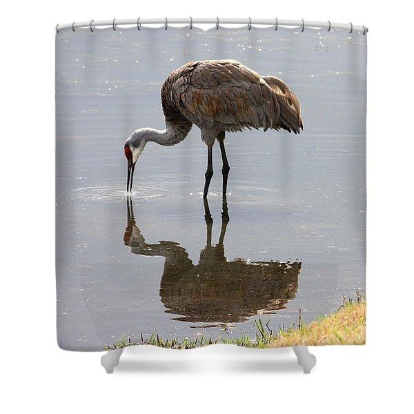 Sandhill Crane on Sparkling Pond Shower Curtain by Carol Groenen