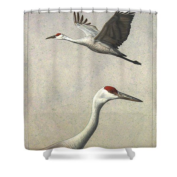 Sandhill Cranes Shower Curtain by James W Johnson