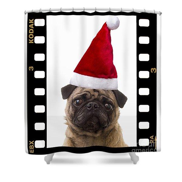Santa Pug - Canine Christmas Shower Curtain by Edward Fielding