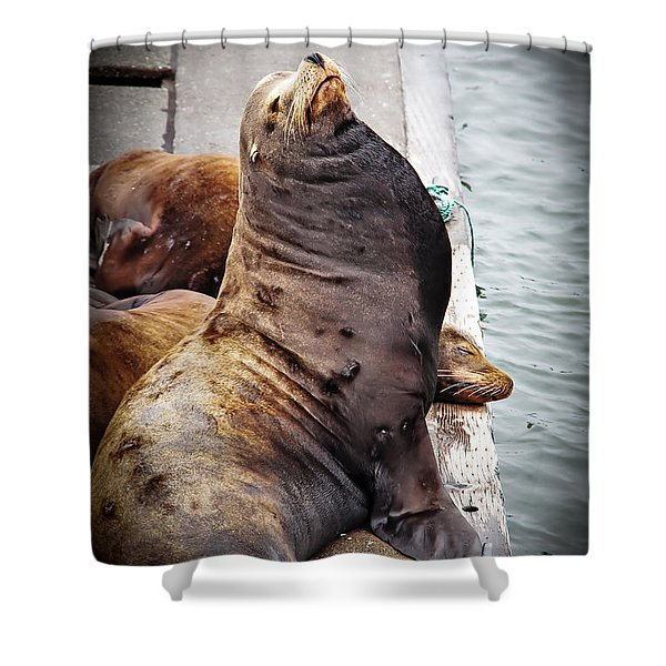 Sea Lion Shower Curtain by Robert Bales