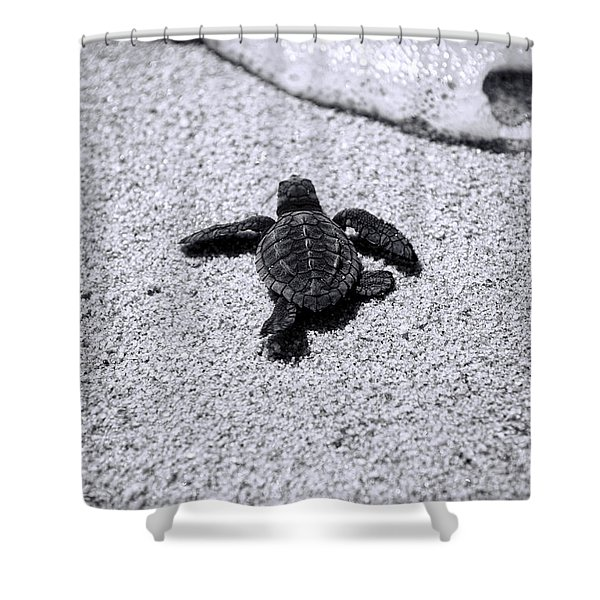 Sea Turtle Shower Curtain by Sebastian Musial