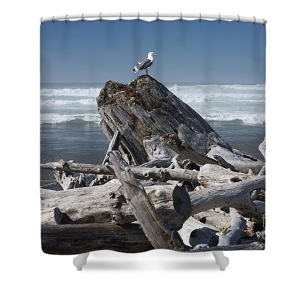 Seagull On Oregon Coast Shower Curtain by Peter French