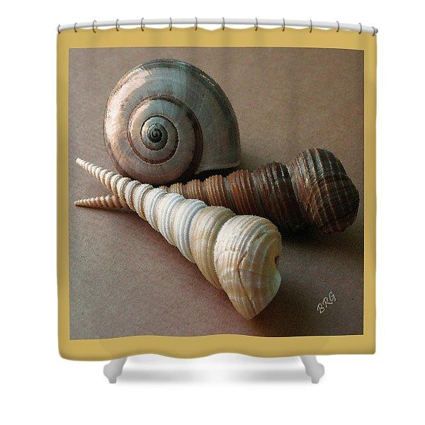 Seashells Spectacular No 29  Shower Curtain by Ben and Raisa Gertsberg