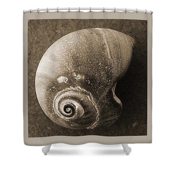 Seashells Spectacular No 31 Shower Curtain by Ben and Raisa Gertsberg