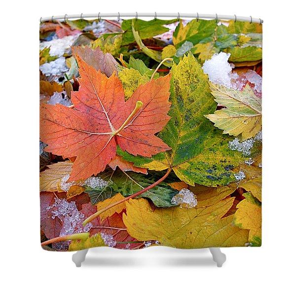 Seasonal Mix Shower Curtain by Rona Black