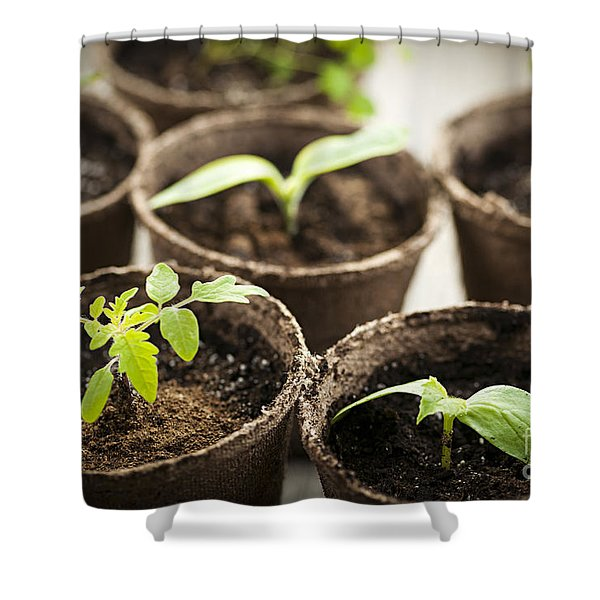Seedlings  Shower Curtain by Elena Elisseeva