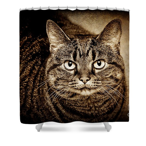 Serious Tabby Cat Shower Curtain by Andee Design