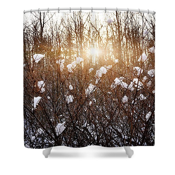 Setting Sun In Winter Forest Shower Curtain by Elena Elisseeva