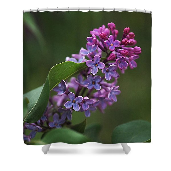 Shades Of Lilac Shower Curtain by Rona Black