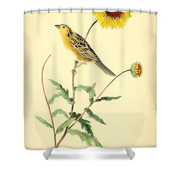 Sharp-Tailed Bunting Shower Curtain by Philip Ralley