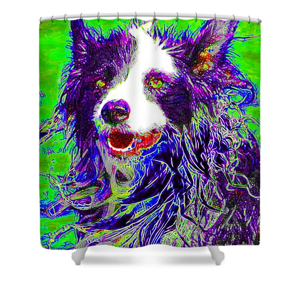 Sheep Dog 20130125v4 Shower Curtain by Wingsdomain Art and Photography