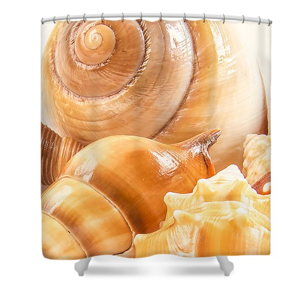 Shells Shower Curtain by Jean Noren