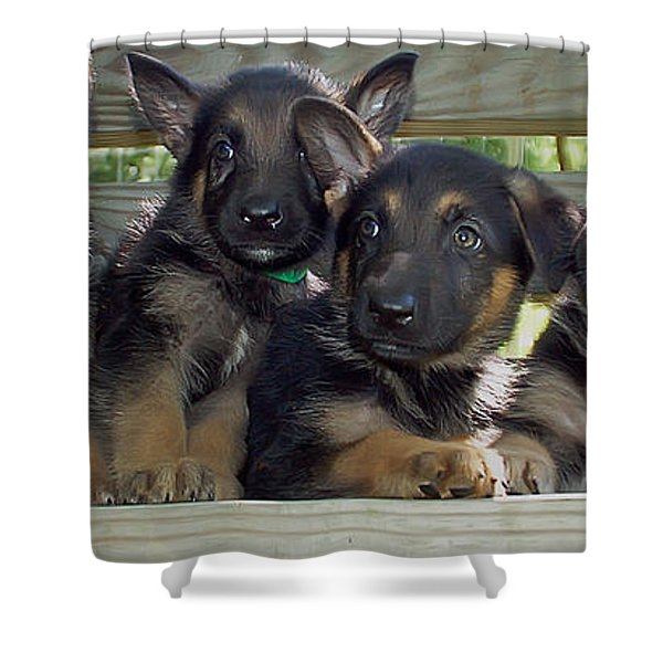 Shepherd Pups 2 Shower Curtain by Aimee L Maher Photography and Art