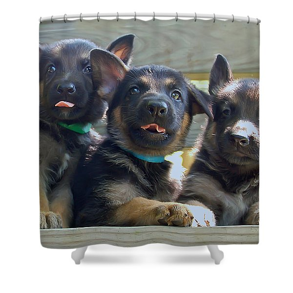 Shepherd Pups 3 Shower Curtain by Aimee L Maher Photography and Art