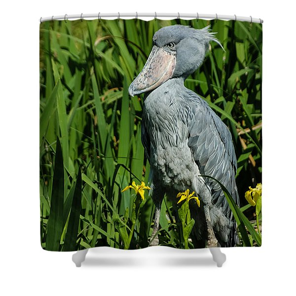 Shoebill Stork Shower Curtain by Georgia Mizuleva