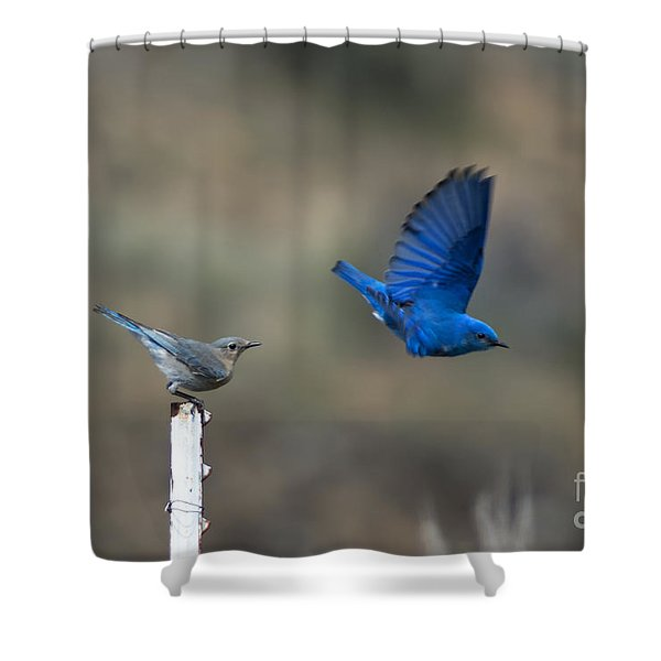 Showing Off Shower Curtain by Mike  Dawson