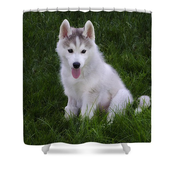 Siberian Huskie Pup Shower Curtain by Bill Cannon
