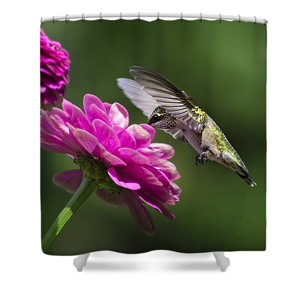 Simple Pleasure Hummingbird Delight Shower Curtain by Christina Rollo