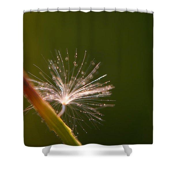 Simpliest Beauty Shower Curtain by Aimelle