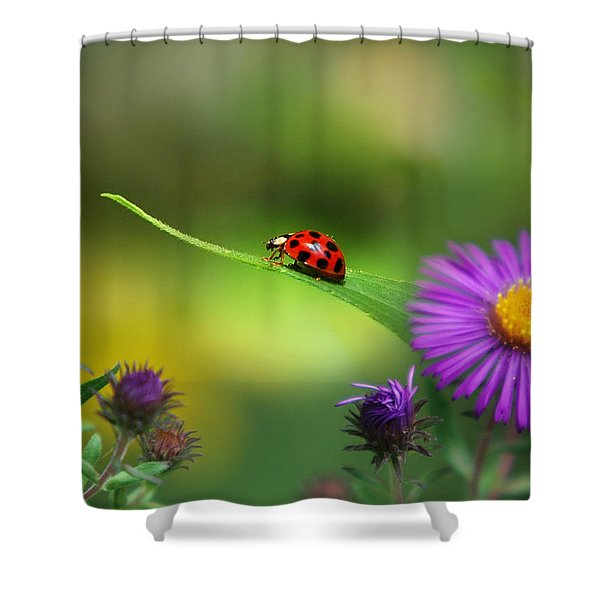 Single In Search Shower Curtain by Christina Rollo