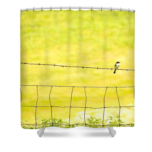 Sitting On A Wire Shower Curtain by Karol  Livote