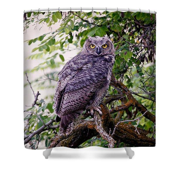 Sitting Owl Shower Curtain by Athena Mckinzie