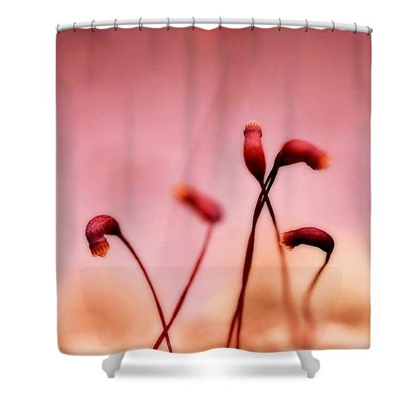small world Shower Curtain by Priska Wettstein