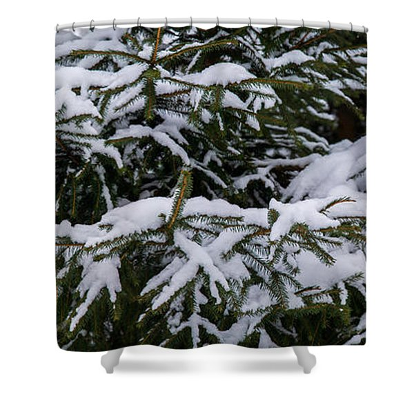Snow Covered Spruce Tree - Featured 2 Shower Curtain by Alexander Senin