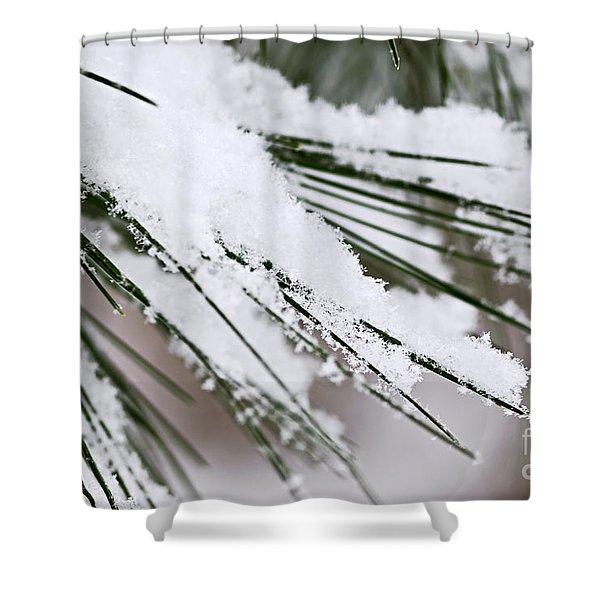 Snow on pine needles Shower Curtain by Elena Elisseeva