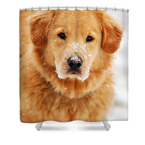 Snowy Golden Retriever Shower Curtain by Christina Rollo