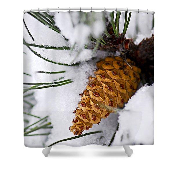 Snowy pine cone Shower Curtain by Elena Elisseeva