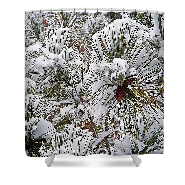 Snowy Pine Needles Shower Curtain by Aimee L Maher Photography and Art