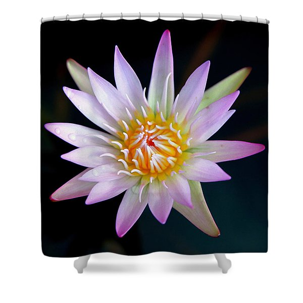 SOFT LULLABYE Shower Curtain by KAREN WILES