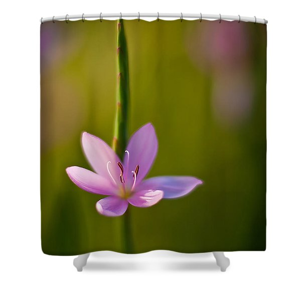 Solo Crocus Shower Curtain by Mike Reid