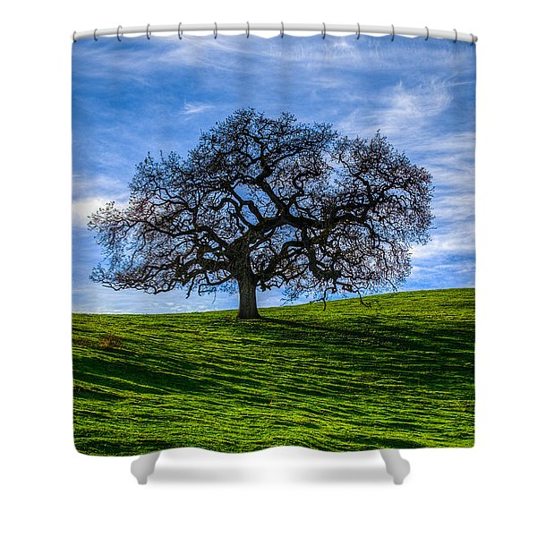 Sonoma Tree Shower Curtain by Chris Austin