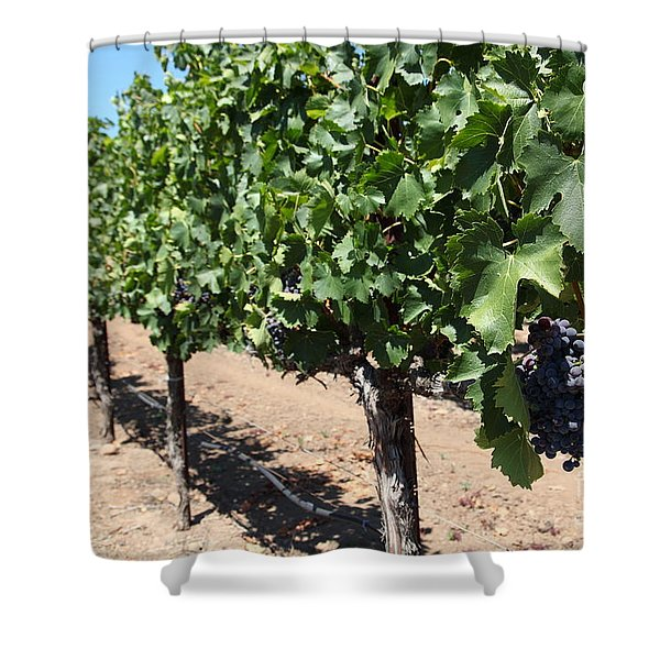 Sonoma Vineyards In The Sonoma California Wine Country 5d24491 Shower Curtain by Wingsdomain Art and Photography