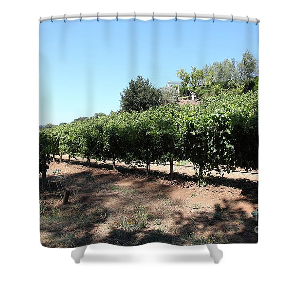 Sonoma Vineyards In The Sonoma California Wine Country 5D24499 Shower Curtain by Wingsdomain Art and Photography