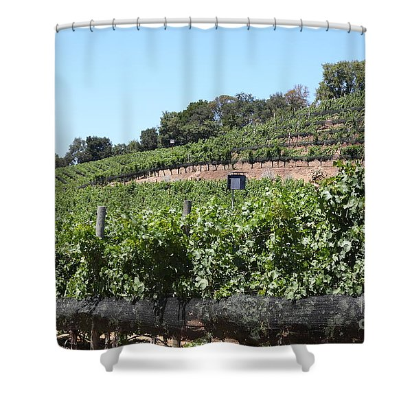 Sonoma Vineyards In The Sonoma California Wine Country 5D24503 Shower Curtain by Wingsdomain Art and Photography