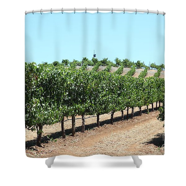 Sonoma Vineyards In The Sonoma California Wine Country 5d24506 Shower Curtain by Wingsdomain Art and Photography