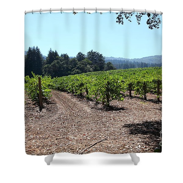 Sonoma Vineyards In The Sonoma California Wine Country 5d24511 Shower Curtain by Wingsdomain Art and Photography