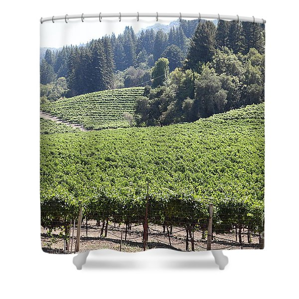 Sonoma Vineyards In The Sonoma California Wine Country 5d24539 Shower Curtain by Wingsdomain Art and Photography