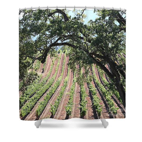 Sonoma Vineyards In The Sonoma California Wine Country 5d24619 Square Shower Curtain by Wingsdomain Art and Photography
