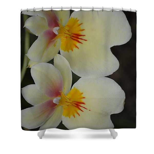 Speechless Beauty Shower Curtain by Sonali Gangane
