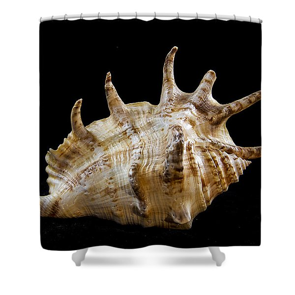 Spikes back side Shower Curtain by Jean Noren