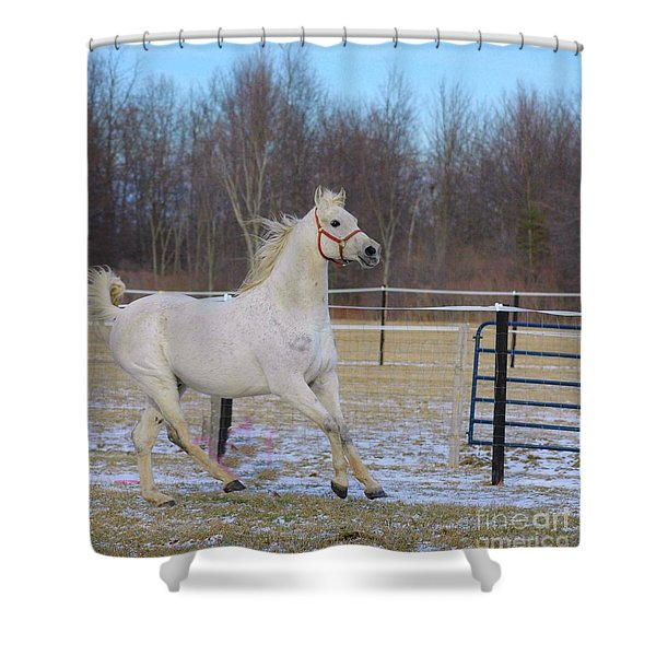 Spirited Horse Shower Curtain by Kathleen Struckle